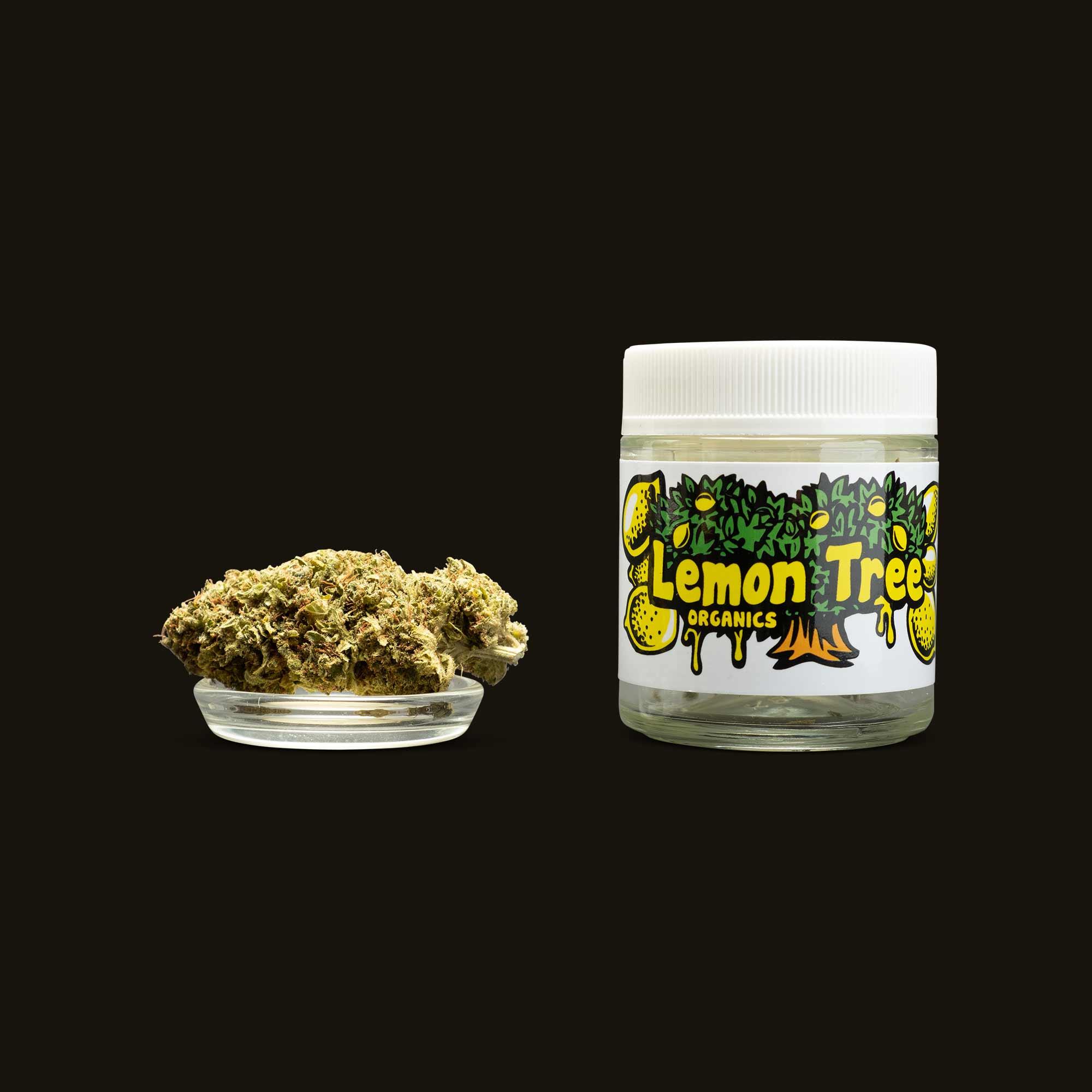 Lemon Tree Organics Lemon Tree