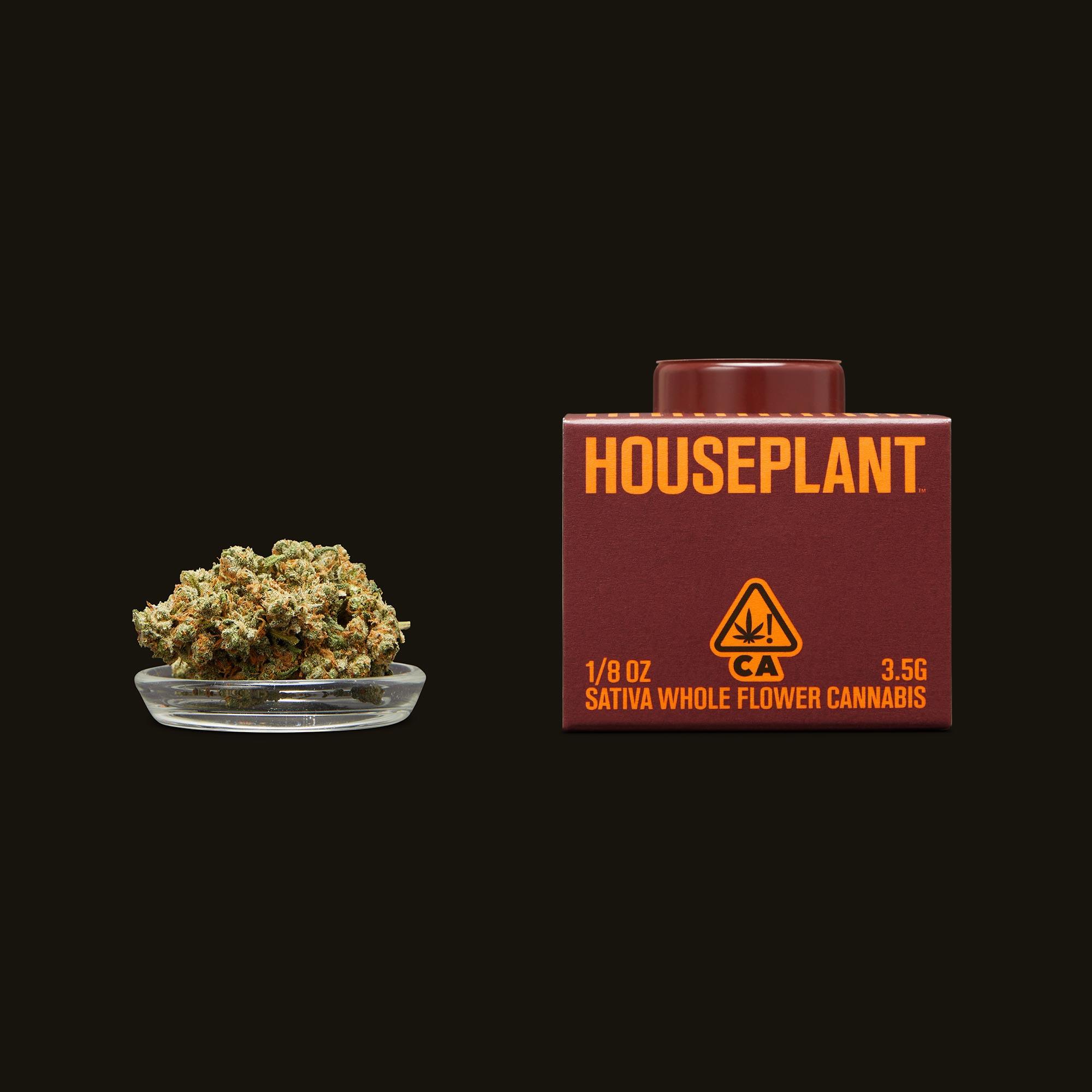 Houseplant Diablo Wind